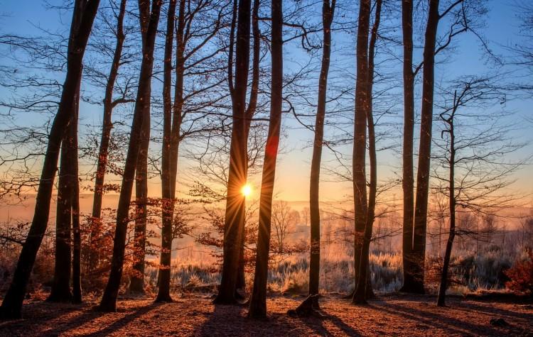 木の隙間から光
