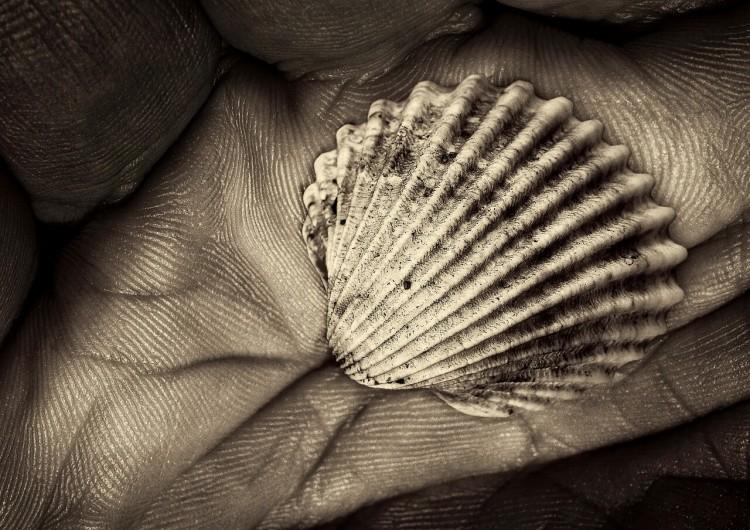 shell-2546312_1280 (1)